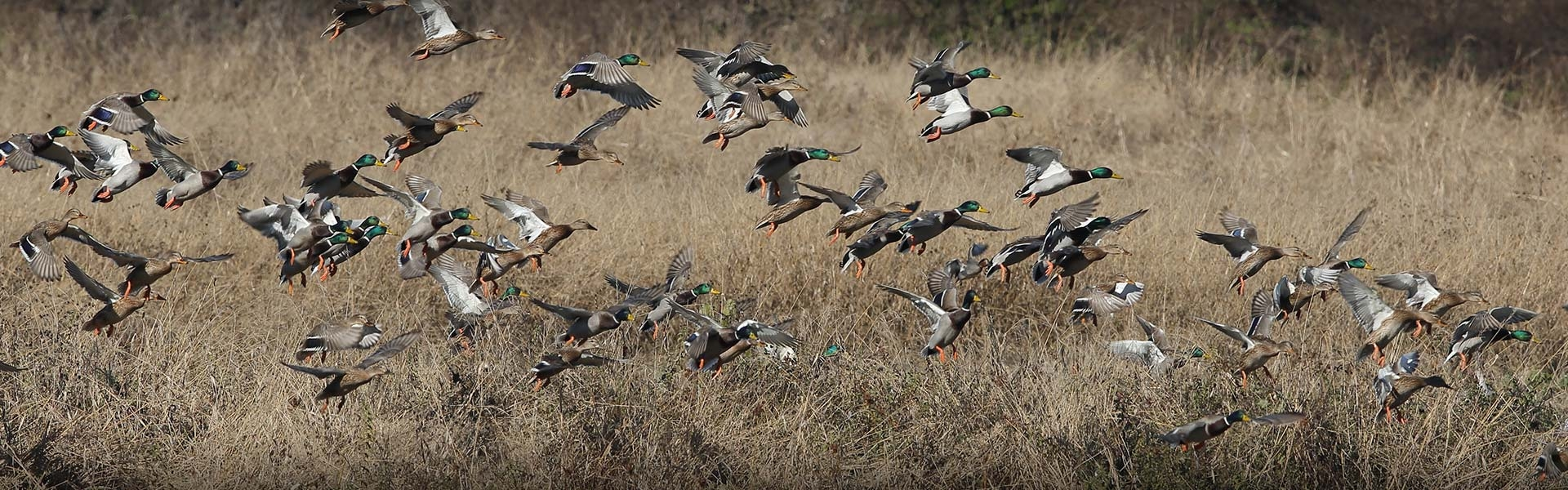 All Inclusive Waterfowl Hunting Packages in Alberta
